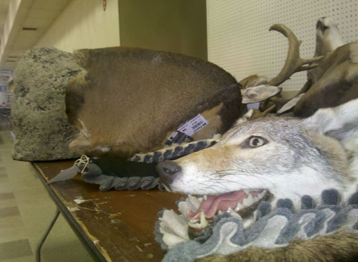 Taxidermy at the fair