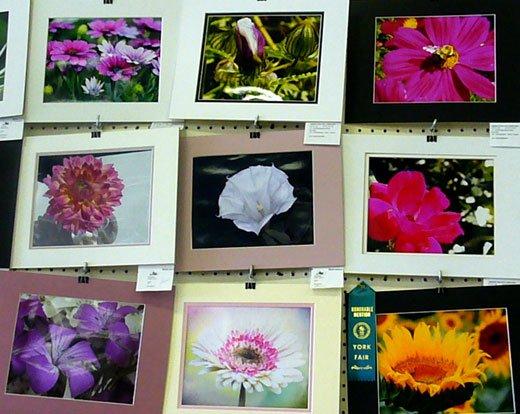 Photos on display at the fair