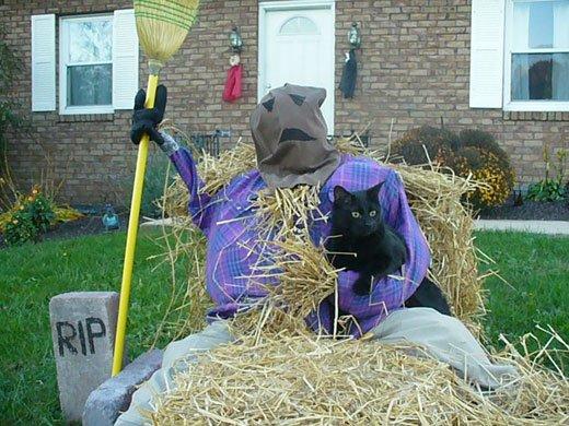 Chris and Mr. Bill, Halloween 2010