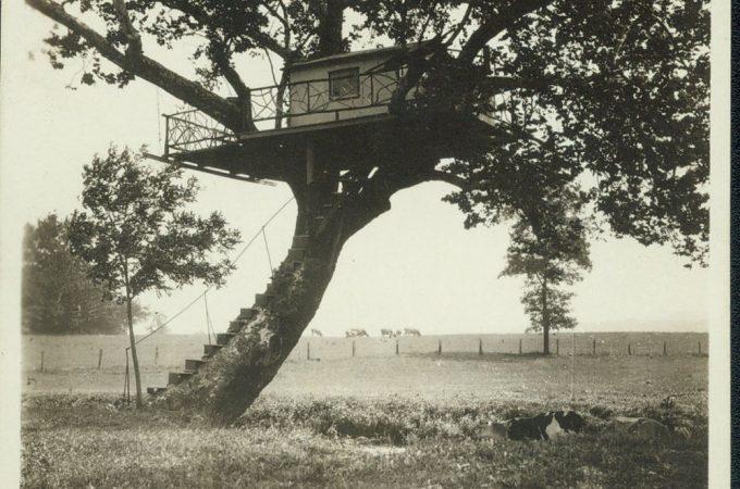Hellam Tree House Makes the Movie News Reels