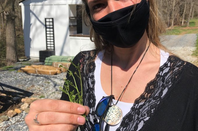 Eating 'weeds' on a Spring Grove farm: First-timer's fun in foraging for food
