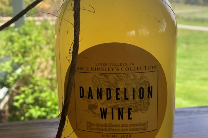 Sunshine in a jar: Home-brewing my own dandelion wine