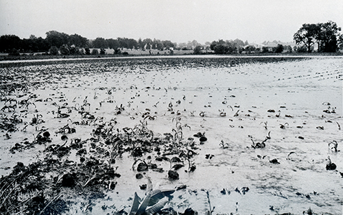 Thomasville area cornfield - Spring Grove Flood 1972Submitted
