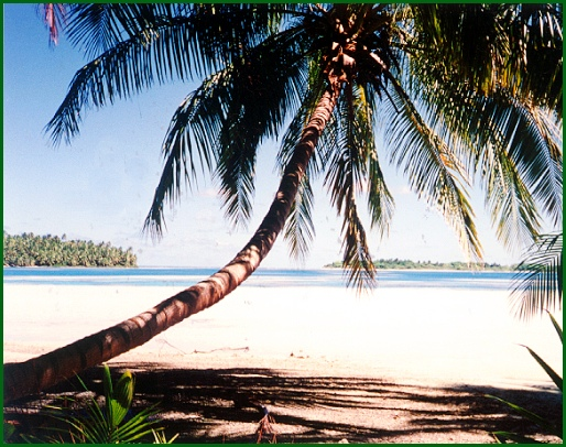 Palm Tree overlooking the Blue Lagoons of Caroline Atoll (S. H. Smith Photo; Sept. 21, 1994)