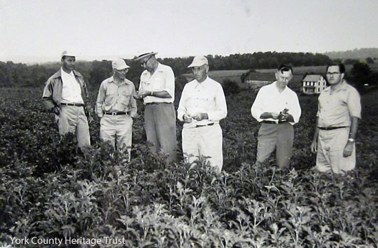 Discussing field conditions.  l-r William Veach, High Rock; A. C. Tollinger, Laurel, owner of the field being discussed; R.S. Kirby, disease specialist of the State College Extension service; L.O. Thompson, New Freedom; John O. Pepper, insect specialist of the State College; and Kenneth Bowman, Fawn Grove, president of the county potato growers' association. (Gazette and Daily August 5, 1953)