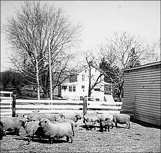 H. L. Smith Farm along Old Dutch Lane, York Township, PA (H. L. Smith photo, March 1962)